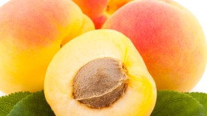 Stonefruits