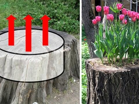 baumstumpf gartengestaltung einen originellen pflanztopf aus baumstumpf selber machen