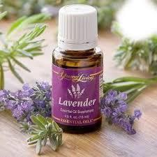 YL Lavender