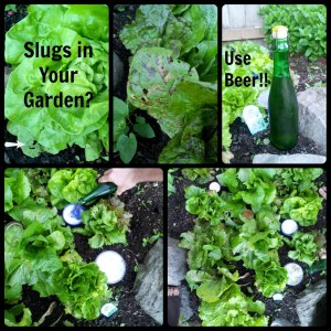 Slugs In Your Garden? | Freshly Grown