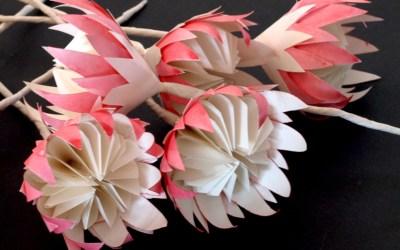 Mini Paper Proteas – Freshly Found Showcase