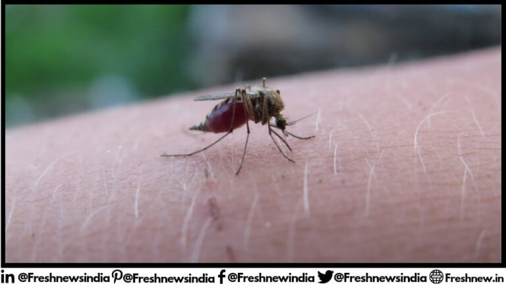 How Mosquito Day started history