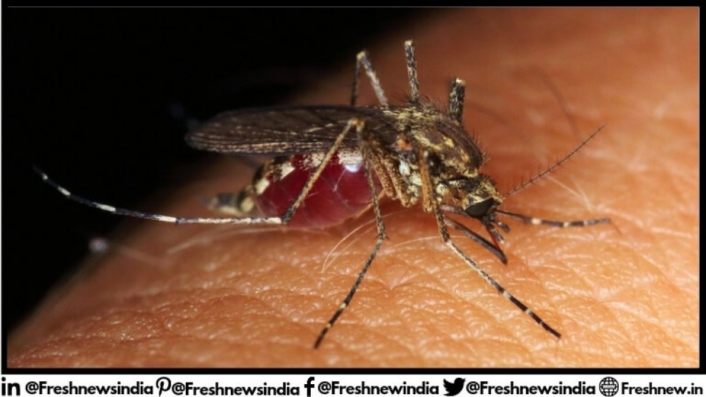 How dangerous are mosquitoes