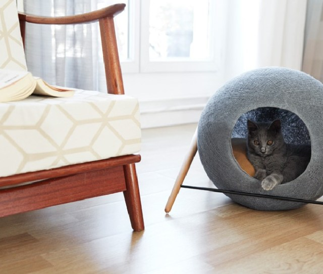 Collect This Idea Cat Cocoon