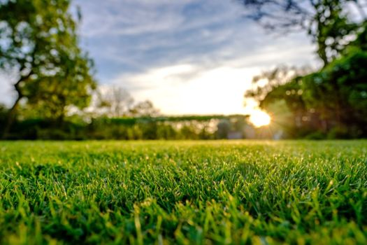 Clippings are your lawn's friend.