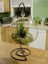 Air Plant Terrariums 24 Great Ideas