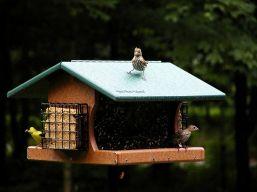 Large Bird Feeder