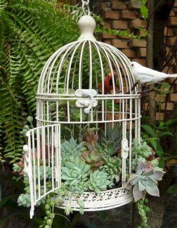 Outdoor Succulent Garden Ideas 1