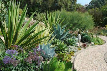 Outdoor Succulent Garden Ideas 6