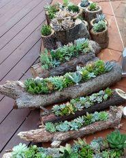 Outdoor Succulent Garden Ideas 8