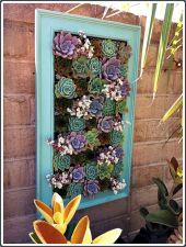 Outdoor Succulent Garden Ideas 9