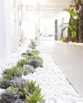 Outdoor Succulent Plant Garden 11
