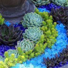 Outdoor Succulent Plant Garden 12