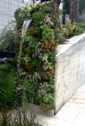 Outdoor Succulent Plant Garden 2