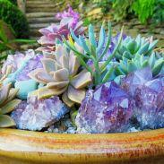 Outdoor Succulent Plant Garden 6