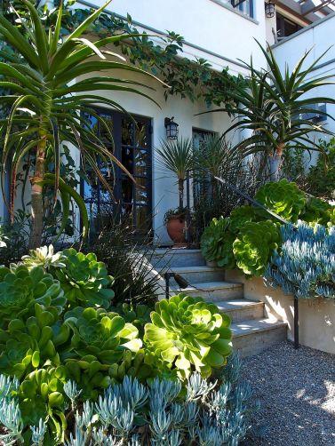 Small Succulent Container Garden Ideas 1