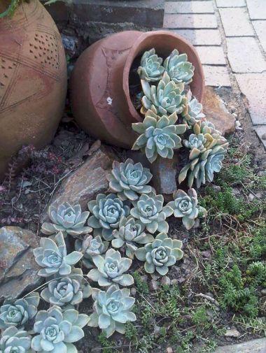 Small Succulent Container Garden Ideas 11