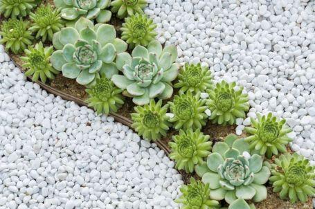 Small Succulent Container Garden Ideas 3