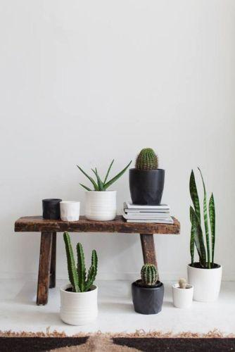 Cactus Home Decor Ideas 16