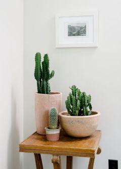Cactus Home Decor Ideas 2