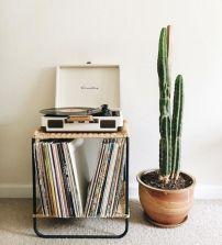 Cactus Home Decor Ideas 22
