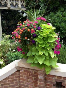 Geranium Container Garden Ideas