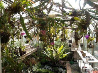 Indoor Orchid Greenhouses