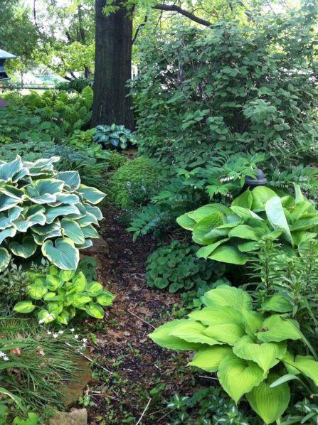 Garden With Hostas