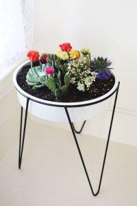 Indoor Cactus Garden Planter