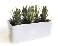 Modern Indoor Planter Pots