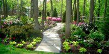 Woodland Garden Landscape