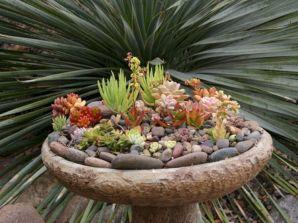 Garden Succulent Ideas 11