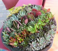 Garden Succulent Ideas 15