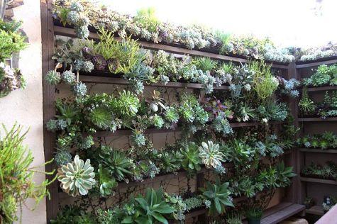 Garden Succulent Ideas 25