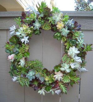 Garden Succulent Ideas 3