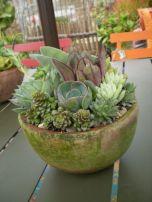 Garden Succulent Ideas 7