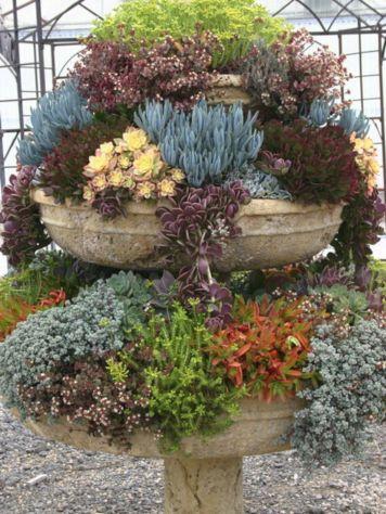 Garden Succulent Ideas 9