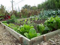 Community Garden Ideas For Inspiration 10