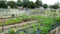 Community Garden Ideas For Inspiration 20