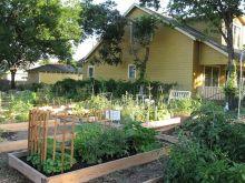 Community Garden Ideas For Inspiration 6