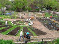Community Garden Ideas For Inspiration 9