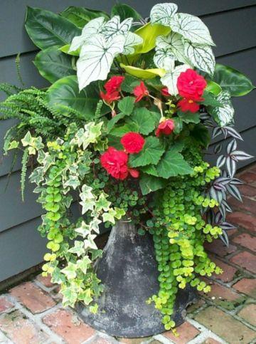 Container Gardening Ideas 12