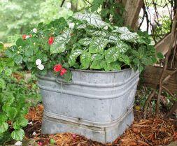 Container Gardening Ideas 17