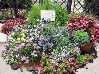 Container Gardening Ideas 21