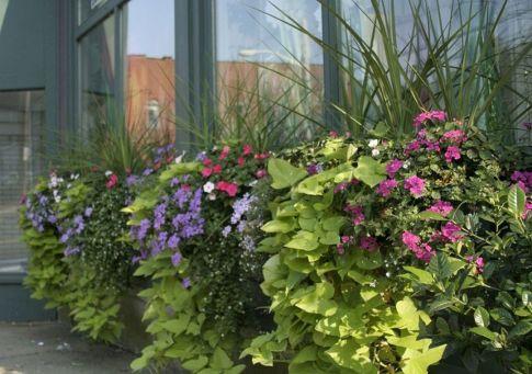 Container Gardening Ideas 22