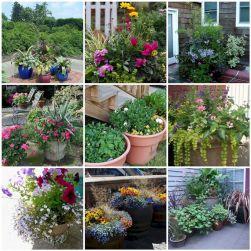 Container Gardening Ideas 23