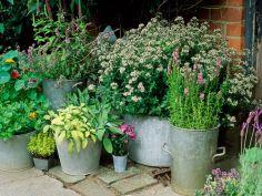 Container Gardening Ideas 5
