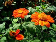 Orange Garden Color Inspiration 14