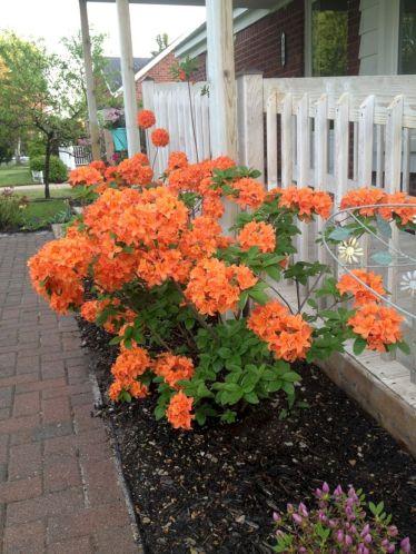 Orange Garden Color Inspiration 15