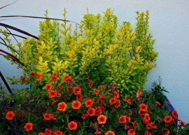 Orange Garden Color Inspiration 7